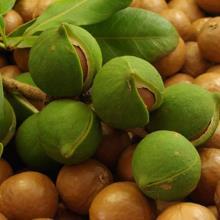 Масло Макадамии /Macadamia Nut Oil Unrefined/ нерафинированное